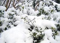 雪也是一味中药 舒筋活血防冻疮