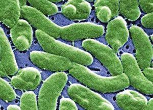 创伤弧菌感染